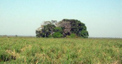 La-Isla-del-Tesoro-de-la-Amazonia-boliviana-ocultaba-el-rastro-de-sus-primeros-habitantes_image_380