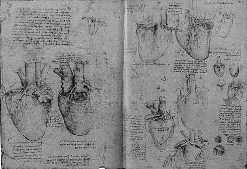 Dibujos_corazon_leonardo_da_vinci
