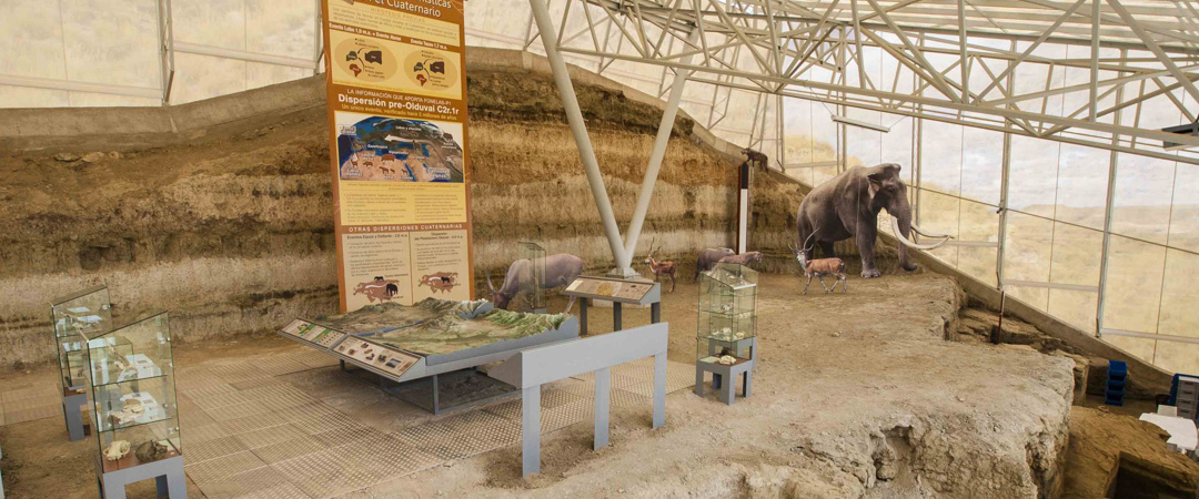 Yacimiento-Paleontologico